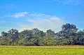Free Field Forest Sky Royalty Free Stock Image - 33757016