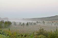 Free Fog Trees Royalty Free Stock Image - 33757026