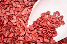 Red Pumpkin Seeds Stock Images