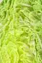 Free Close Up Of Chenese Cabbage Stock Photo - 33763330