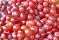 Free Red Grape Royalty Free Stock Photos - 33765398