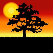 Sunset Landscape With Tree Silhouette. Royalty Free Stock Photography