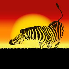 Free Illustration Of Zebra Silhouette At Sunset, Vector Stock Photos - 33765363