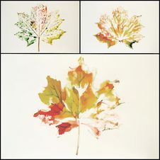 Maple Leaf Painted In Watercolor Stock Image