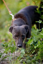 Free The Black Doggie Stock Photos - 33772063