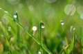 Free Dew Drops On Grass Blades Stock Photos - 33777073