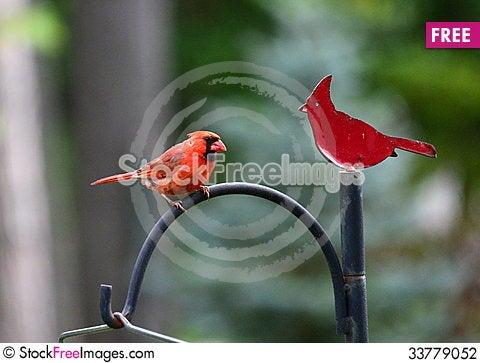 Free Cardinal And Cardinal Stock Photography - 33779052
