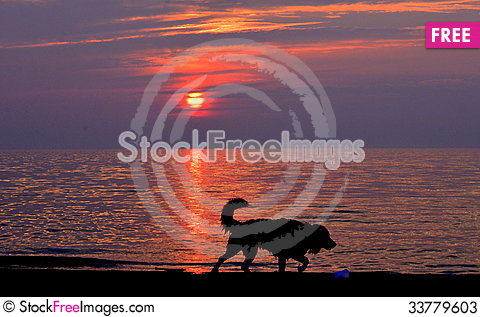 Free Down By The Dog Beach Stock Photos - 33779603