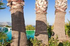 Free Three Palms. Royalty Free Stock Photo - 33783825