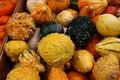 Free Gourds 5713 Stock Photos - 3388973