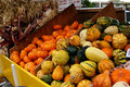 Free Gourds  And Mini Pumpkins 5714 Stock Photo - 3389070