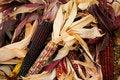 Free Indian Corn 5717 Stock Photos - 3389283