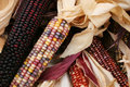 Free Indian Corn 5723 Royalty Free Stock Photo - 3389305