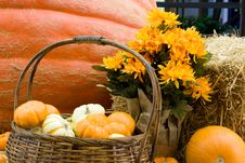 Free Big Pumpkin And Basket Royalty Free Stock Photography - 3380007