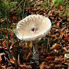 Free Autumn Fungi Stock Photos - 3380693
