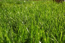 Free Grass Royalty Free Stock Images - 3381079