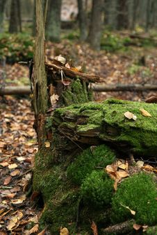 Free Mossy Tree Trunk Royalty Free Stock Photos - 3381128