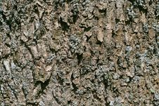 Free Bark Royalty Free Stock Photos - 3381418
