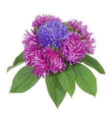 Free Bouquet 04 Stock Photo - 3381690