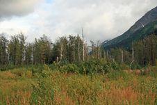 Free Alaska Stock Images - 3382174