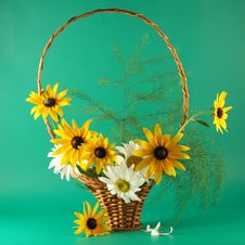 Free Basket With Chamomiles Royalty Free Stock Image - 3383116
