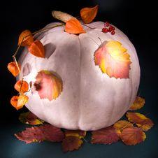 Free Autumn Pumpkin Stock Photo - 3383510