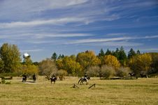 Horse Show Pasture Field Royalty Free Stock Photography