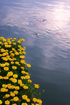 Free Flowers And Fish Stock Image - 3383741