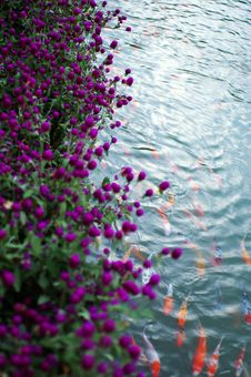 Free Flowers And Fish Stock Photo - 3383780