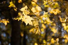 Free Colorful Autumn Stock Photos - 3383933