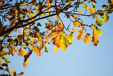 Free Colorful Autumn Stock Photography - 3384102