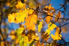 Free Colorful Autumn Stock Photos - 3384113