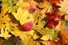 Free Colorful Leaves Stock Photos - 3385583