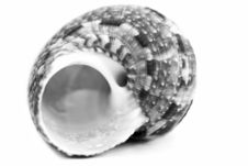 Free Sea Shell Stock Images - 3386414