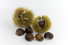 Raw Chestnuts.a Close Up Shot Stock Photography