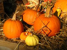 Free Flower Shop Pumpkins Royalty Free Stock Photos - 3388908