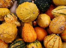 Free Gourds 5712 Royalty Free Stock Images - 3388919