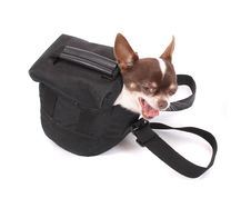 Free Dog In The Bag Stock Image - 3388981