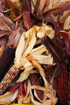 Free Indian Corn 5715 Royalty Free Stock Images - 3389199
