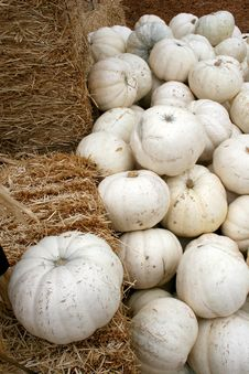 Free White Pumpkins & Hay 5749 Royalty Free Stock Photo - 3389235