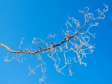Free Frozen Tree Branch Against Sky Stock Photography - 3389242