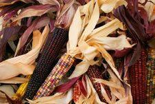 Free Indian Corn 5717 Stock Photos - 3389283