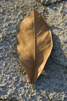 Dry Leaf On Dry Ground Royalty Free Stock Photos
