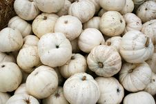 Free White Pumpkins 5745 Royalty Free Stock Photo - 3389405