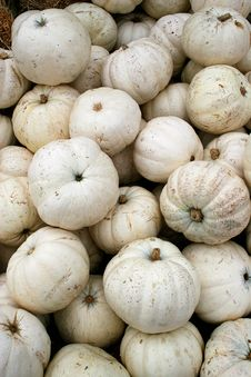 Free White Pumpkins 5749 Stock Images - 3389414