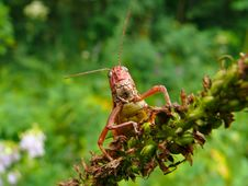 Free Grasshopper 6 Stock Images - 3389644