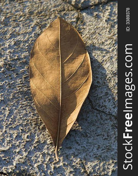 Dry leaf on dry ground