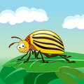 Free Cartoon Colorado Potato Beetle Stock Photography - 33809422