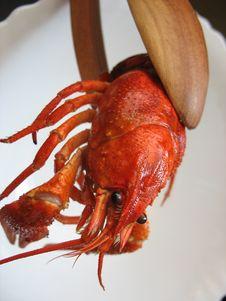 Free Crawfish Stock Photography - 33811192