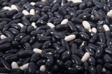 Free Black Beans Stock Images - 33822194